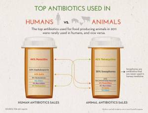 The different antibiotics used in humans and beef cattle
