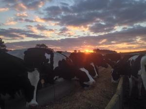 A picture from Gilmer Dairy Farm's Facebook page.