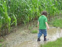 Corn, rain, WOTUS